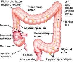 Colon | definition of colon by Medical dictionary