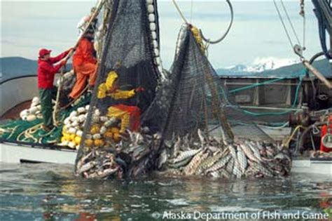 2013 Salmon Harvest Sets New Records: Press Release