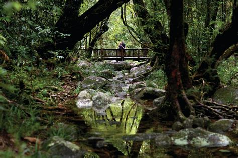 Guide to the Daintree Rainforest, Queensland - Tourism