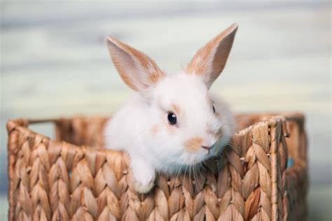 50 Cool and Funny Rabbit Names and Pet Naming Guide   Cute