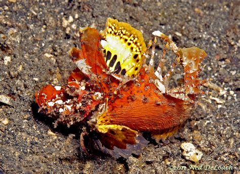 Lembeh – The Gift That Keeps Giving