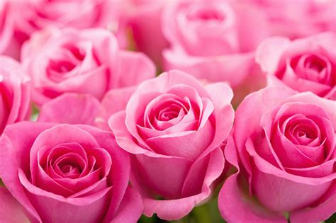 CA Flower Mall Petalers Fete Galentine's Day & V-Day with